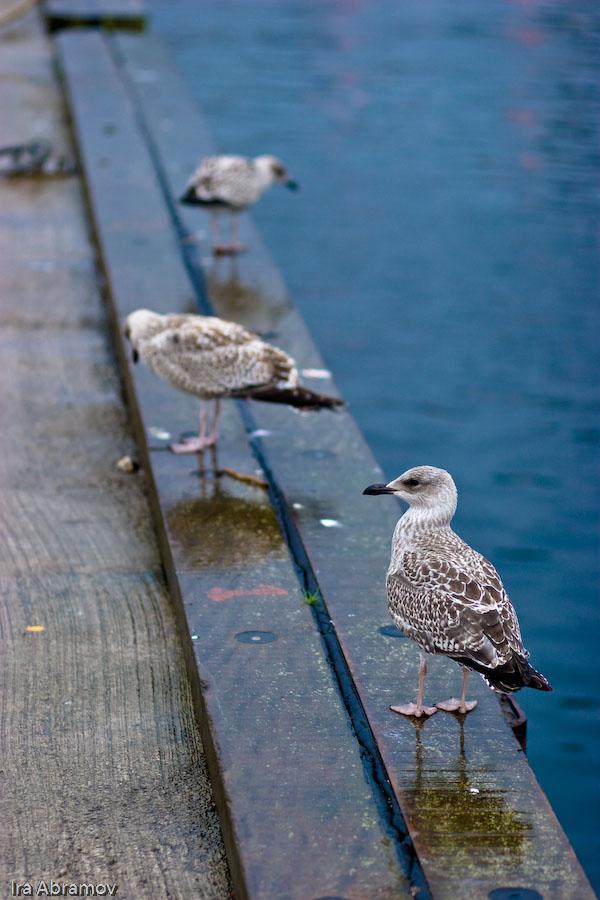 ציפורים במרינה בטארברט